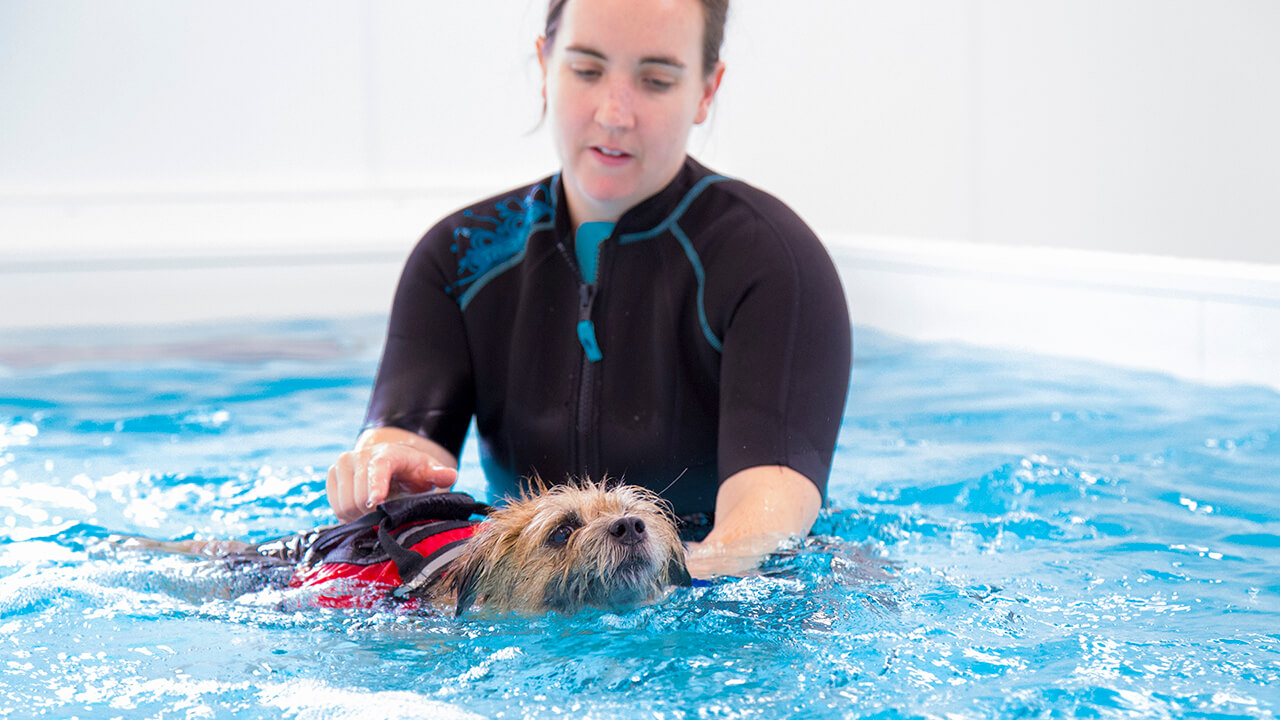 Image result for veterinary physiotherapist