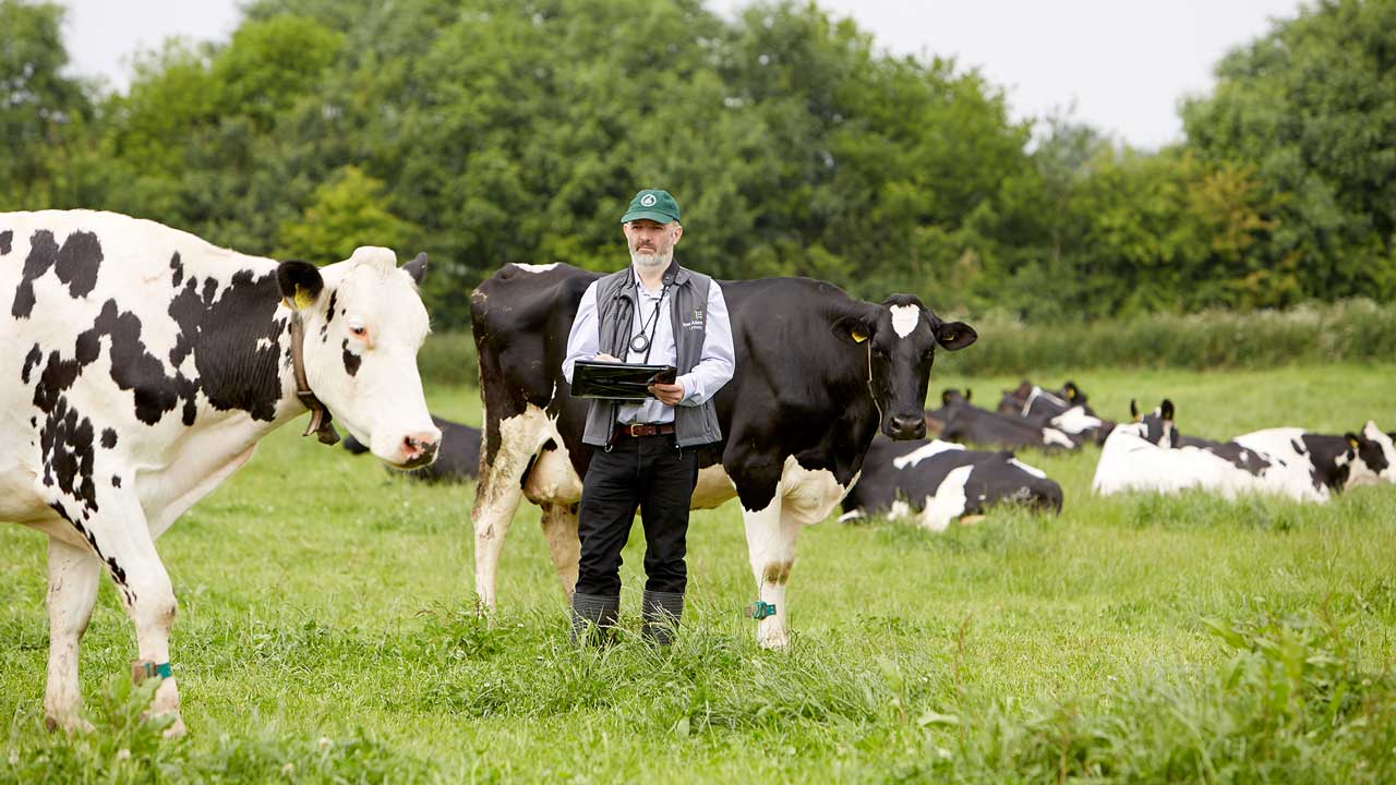 Dairy cow research