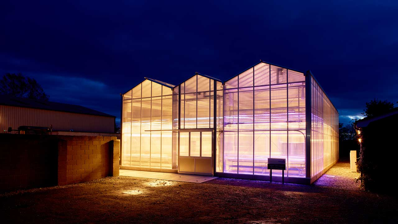 Jean Jackson Glasshouse at night